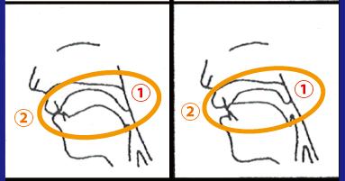 oral-haretsuon_1-2