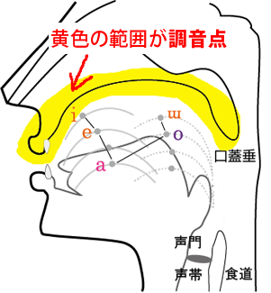 Oral cross-sectional view