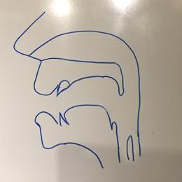 口腔断面図の描き方07