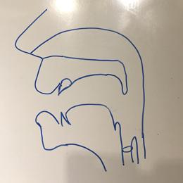 口腔断面図の描き方08