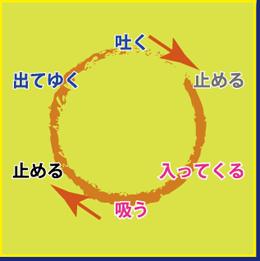 呼吸の循環図