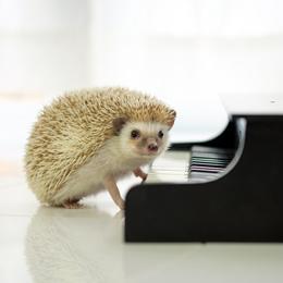 動物のピアノ弾き
